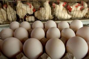 Ucrania y Singapur firman certificados veterinarios para la exportación de aves y huevos