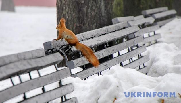 До 16° морозу і хуртовини: синоптики дали прогноз на вівторок