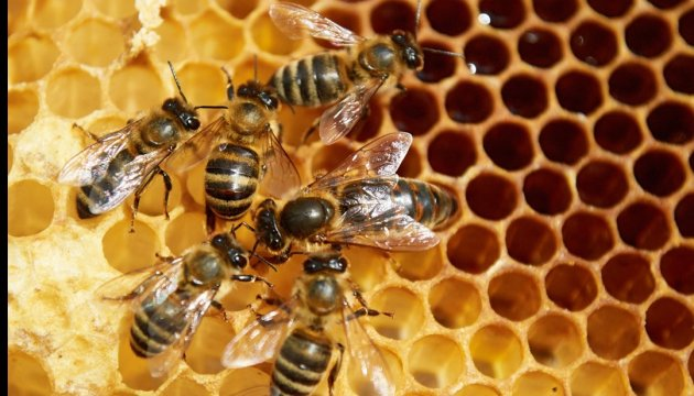 Массовая гибель пчел: проверка нашла химикаты в 53%