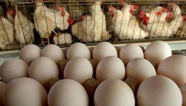 В Україні не використовують фіпроніл у птахівництві - Держспоживслужба