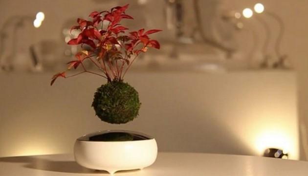 Японці винайшли літюче дерево, яке балансує в повітрі і навіть злегка крутиться