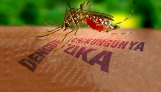 У МОЗ заспокоїли: небезпеки поширення вірусу Зіка в Україні немає