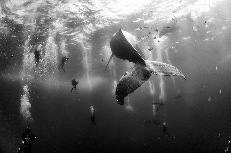 II место в категории «Природа» Фото: Anuar Patjane Floriuk