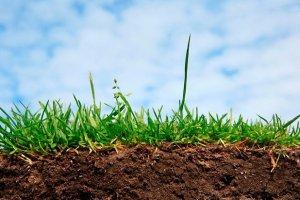 Для управління земельними відносинами в Україні створили Керівний комітет