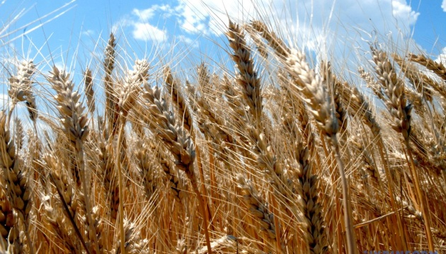Ukraine exports $1.87 bln worth of wheat in eight months