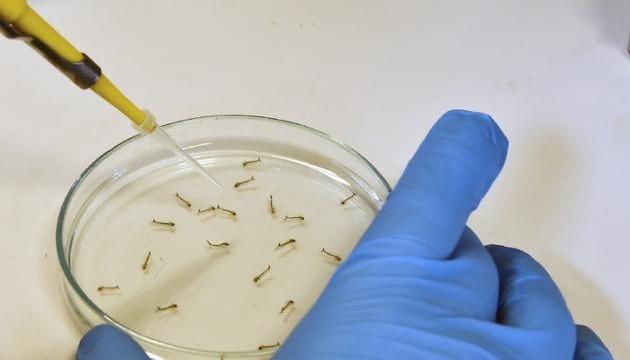 Вірус Зіка можуть переносити 53 види українських комах - МОЗ