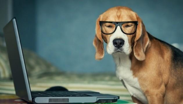 Вчені розробили спеціальний IQ-тест для собак