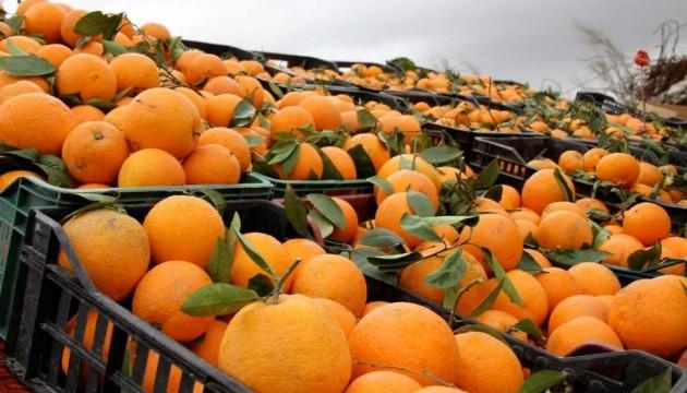 У Чорноморський порт привезли більше 250 тонн заражених цитрусових