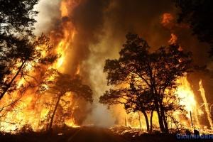 Лесные пожары: наступает период особой опасности