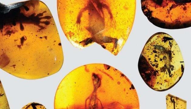 Палеонтологи знайшли у бурштині найдавнішого хамелеона