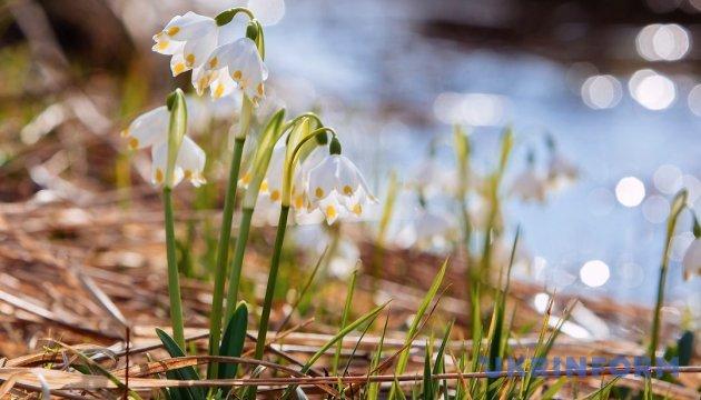Свято 8 березня для українців розтягнеться на чотири дні