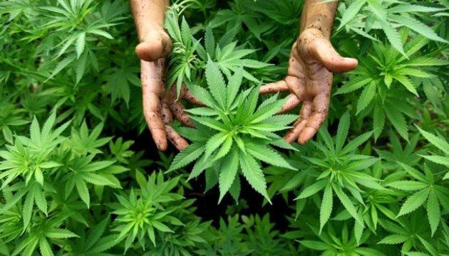 Міністр туризму Мексики виступив за легалізацію марихуани