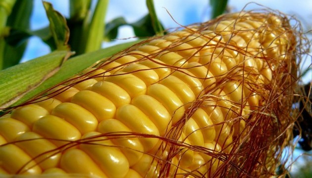 Ukraine expects record corn crop
