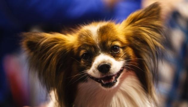 Штати заборонили ввозити собак з понад сотні країн, серед них - Україна