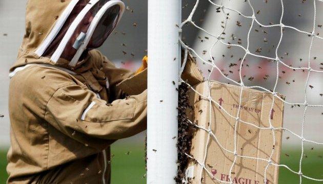 У Бразилії дикі бджоли вклали на землю футболістів і суддю