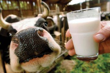Statistikdienst: Milchproduktion in der Ukraine um 3,7 Prozent zurückgegangen