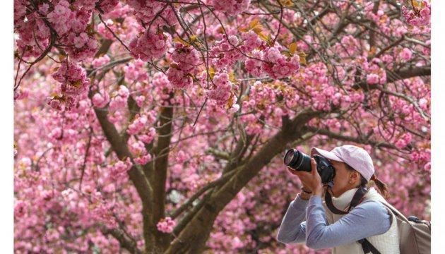 Посол Японії висадив сакури у Ботанічному саду