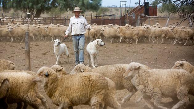 Фото: www.theaustralian.com.au