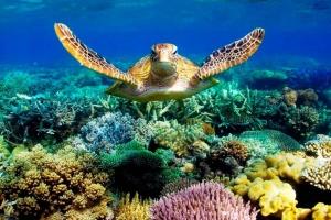В Японии к анализу морской воды привлекли черепах