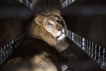Aujourd'hui marque la Journée internationale pour les droits des animaux