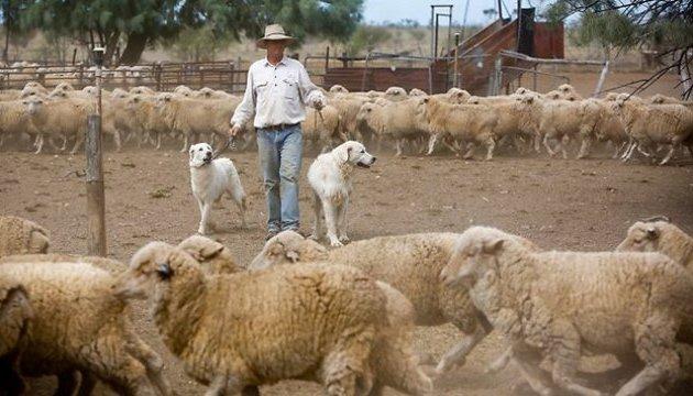 Фермерство розвиватиметься за державною програмою - Кабмін
