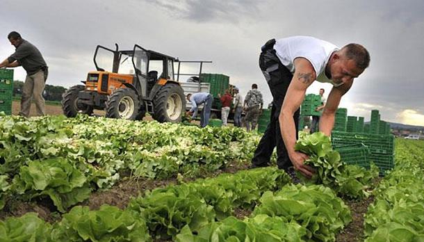 В Минагро планируют увеличить количество фермеров посредством дерегуляции