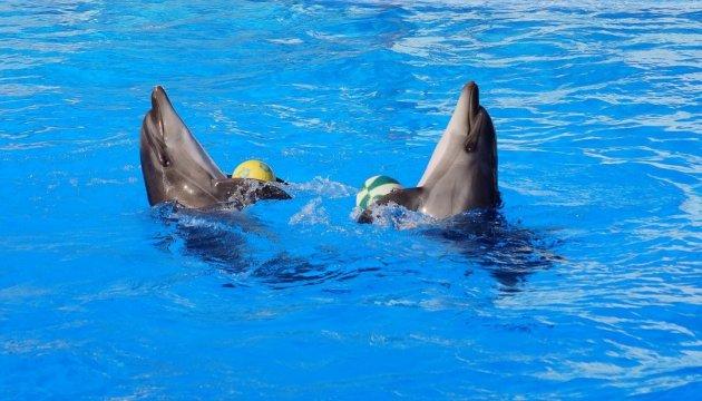 Дельфіни і морські котики з київського дельфінарію переїхали до Одеси