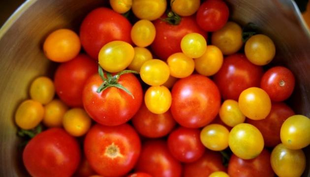 В Украине выросли оптовые цены на томаты - эксперты
