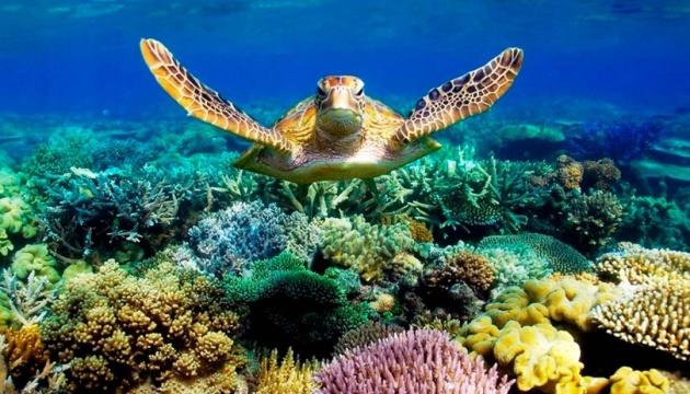 На Великому бар'єрному рифі з дрона зняли наймасштабнішу міграцію зелених  черепах