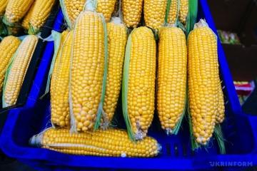 L'Ukraine a doublé ses exportations de maïs