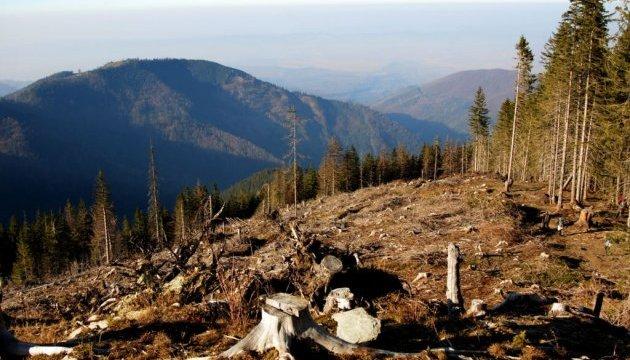 На Прикарпатье чиновники нарубили леса почти на ₴2 миллиона