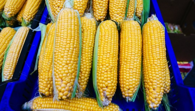 Ukrainian corn exports grow more than twofold