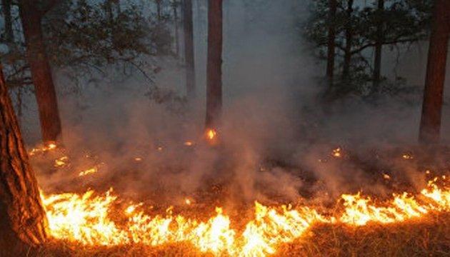 На Херсонщині локалізували лісову пожежу на площі 70 гектарів