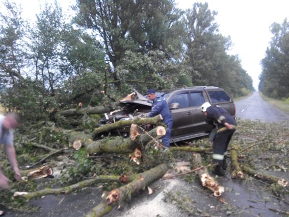 поваленные деревья фото: ГСНС