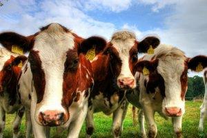 Эксперты назвали условия для эффективной работы мясного рынка в Украине