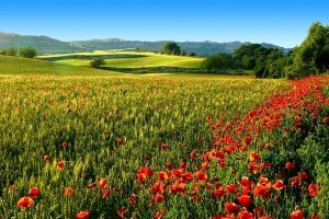 Международным годом здоровья растений объявили 2020-й