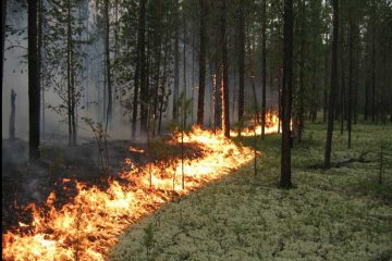 Kyiv region residents warned of extreme fire hazard