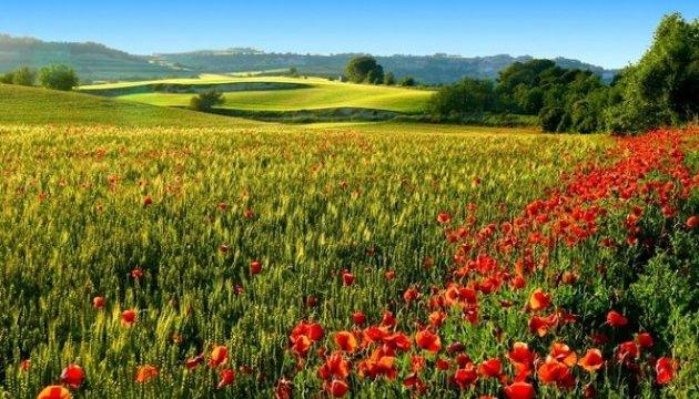 Сьогодні відзначають Всесвітній день охорони довкілля