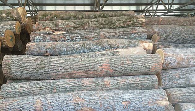 La UE solicita consultas con Ucrania sobre la prohibición de la exportación de madera