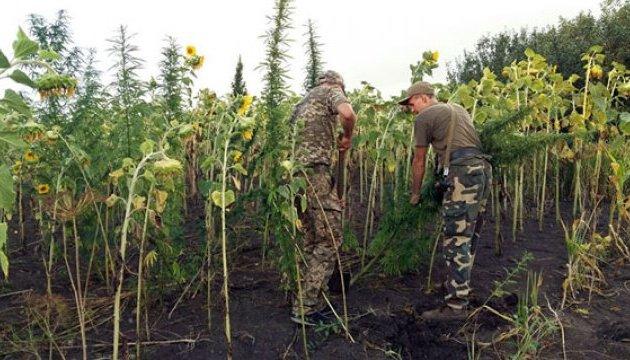 Конопля как спрятать поля конопли в москве