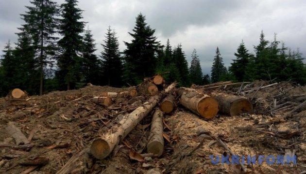 Как карпатские леса за деньги сделать больными...