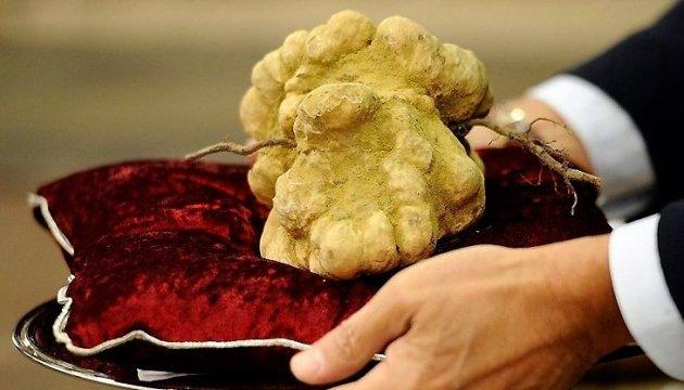 Українські трюфелі: дорожче за бурштин