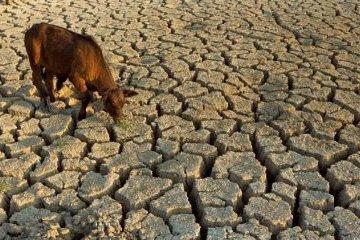 大约70%的克里米亚草原由于缺水而不适合农民耕种