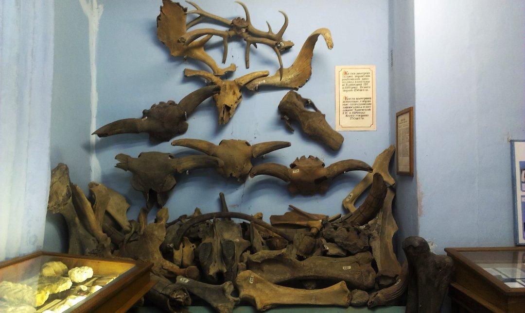 У Музеї природи у Канівському заповіднику