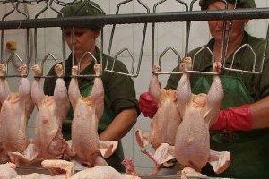 Експорт української курятини за два місяці зріс майже на 43% - експерти