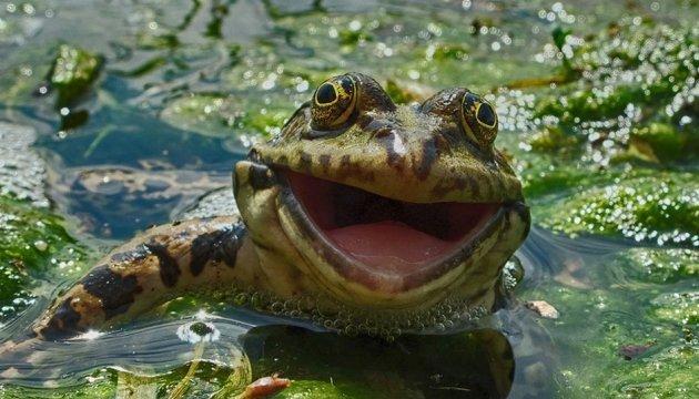 «Назви таргана ім'ям колишнього і згодуй жабі»: зоопарк Миколаєва проведе незвичну акцію