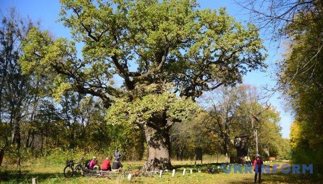 На Сумщине будут судить мужчину, который срубил 280 деревьев элитных пород