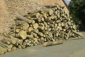 Exportaciones de productos de madera aumentan un 8%