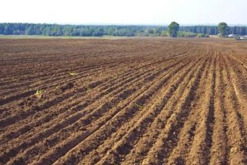 Weltbank: Eröffnung des Bodenmarktes trägt zum BIP-Wachstum bei