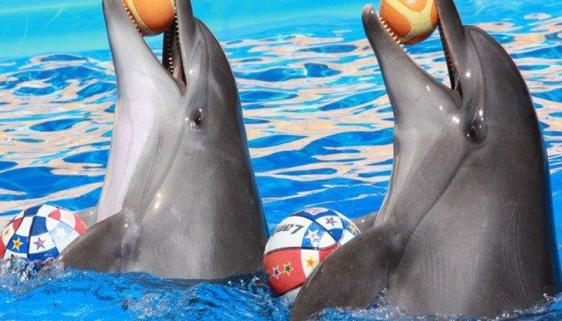 Супрун заявляє, що від дельфінотерапії жодної користі